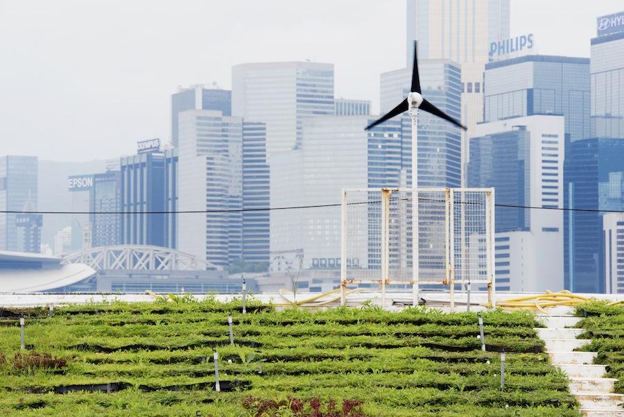 Sustainable Farming near City